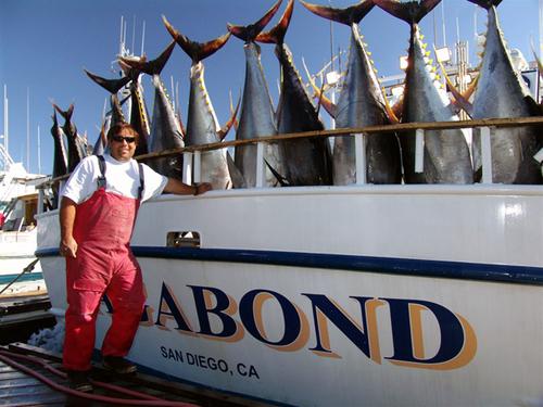 Point Loma Sportfishing San Diego Ca